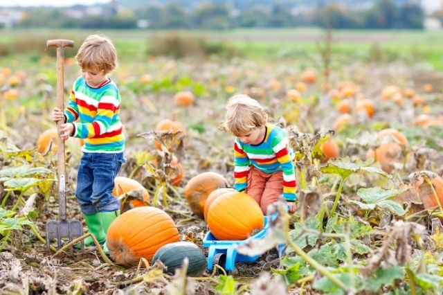 pumpkin patches in St. Louis