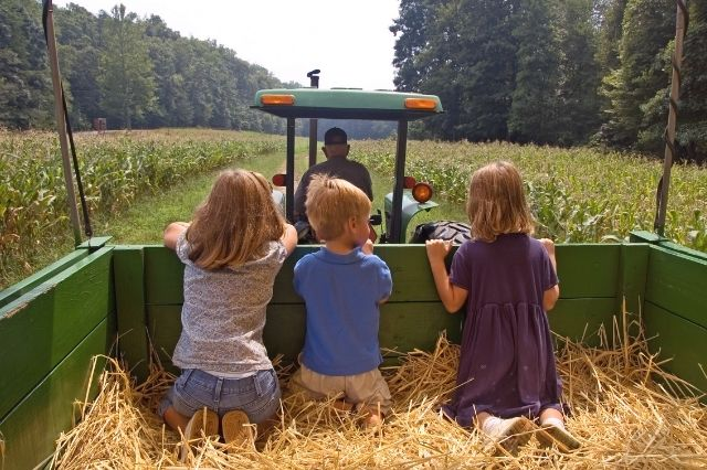 Hay ride at a pumpkin patch