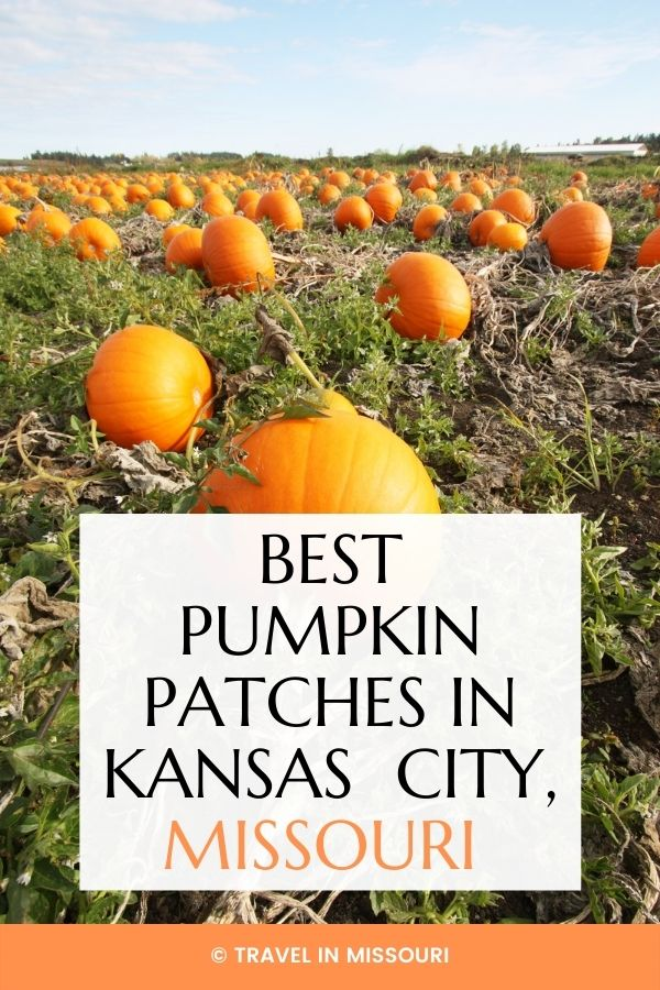 15 best pumpkin patches in or near Kansas City to visit this fall. We've also included our favorite nearby apple orchards, corn mazes and Boo at the Zoo.