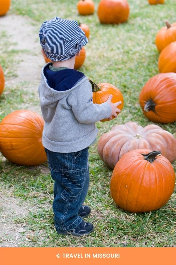 Pumpkin patches near Kansas City, Mo. 15 best pumpkin patches in or near Kansas City to visit this fall. We've also included our favorite nearby apple orchards, corn mazes and Boo at the Zoo.