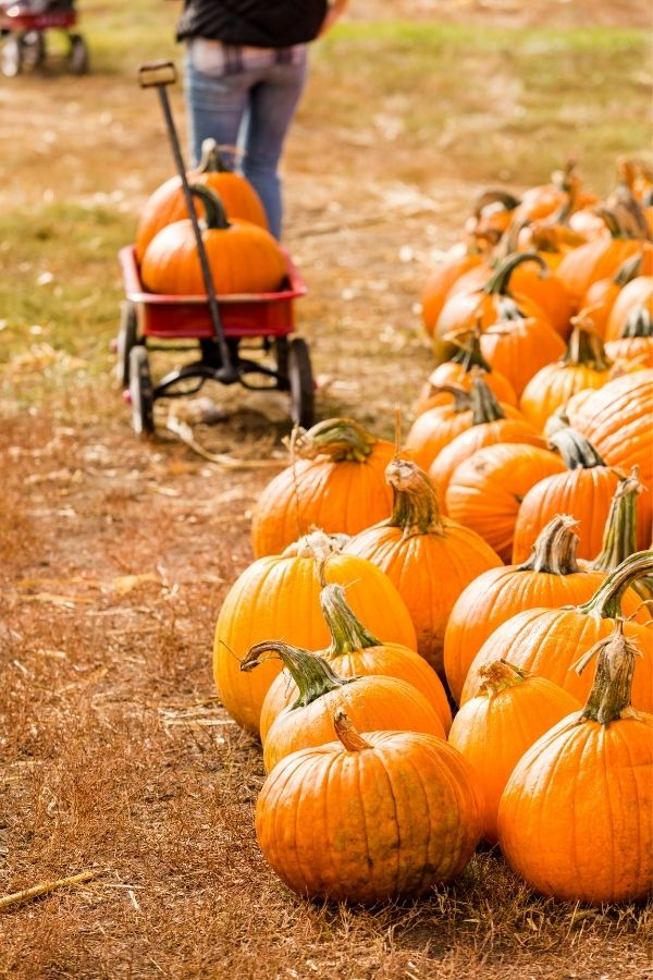 best pumpkin patches in Columbia